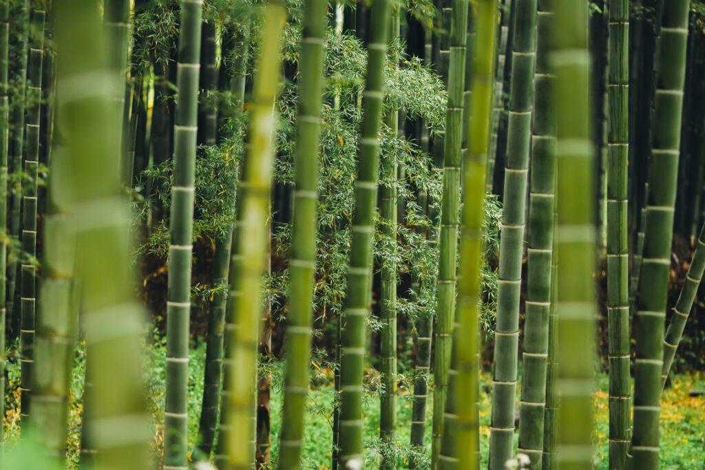 Nieuwe favoriet: duurzaam ondergoed van bamboe