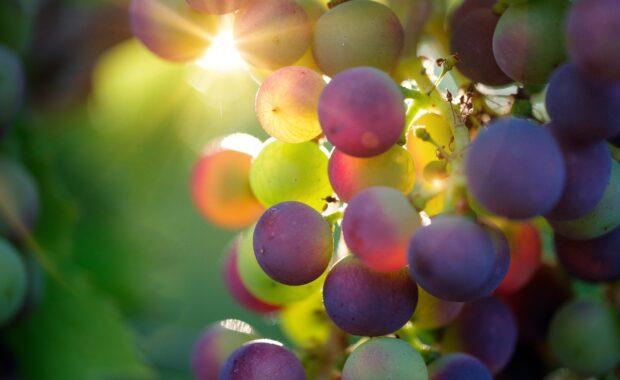 biologische wijnen